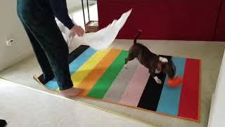 Team Bull Terrier funny bag battle