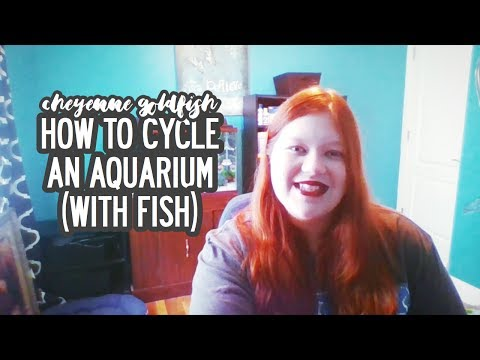 How To Cycle An Aquarium (with Fish) // Cheyenne Goldfish