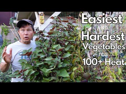 Easiest & Hardest Vegetables to Grow in 100+ Summer Garden Heat