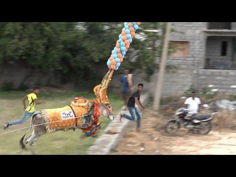 TSK Bull Jumping and Running with PP ! Hori habba Jallikattu