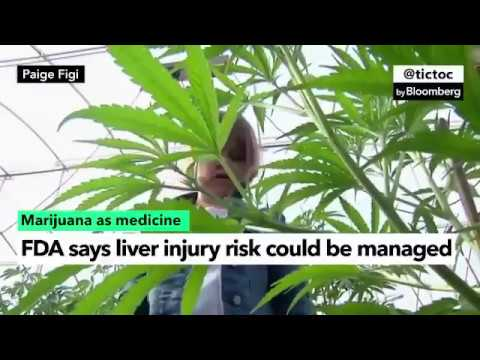 Drug Made From Cannabis Plant Gets Backing From FDA Staff