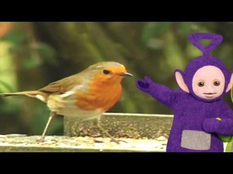 Teletubbies | Robin | 888 | Cartoons for Children