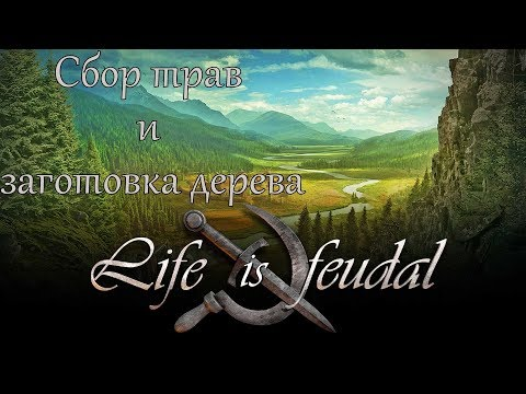 Life is feudal your own улей life is feudal лечение