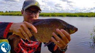 Ловля больших лещей в августе на канале. Отличная рыбалка на фидер.