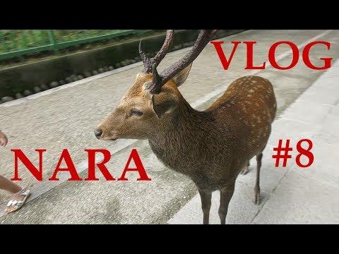 Vlog Japon #8 - Nara, Daims Et Ryokan