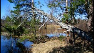 Видео открытка Красивая природа весной(Красивая природа весной. Видео открытка из личного фото альбома. Подписывайтесь на YouTube канал: http://goo.gl/LdKehC..., 2016-02-09T13:40:12.000Z)