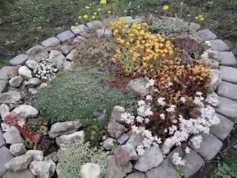 Каменистый садик. Очитки и молодило. Часть 1.