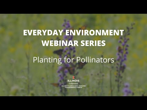 Everyday #Environment Webinar Series: Planting For #Pollinators