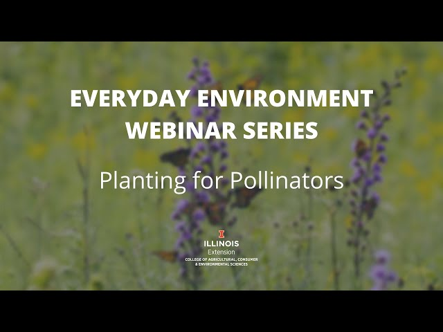 Planting for #Pollinators: Everyday #Environment Webinar Series