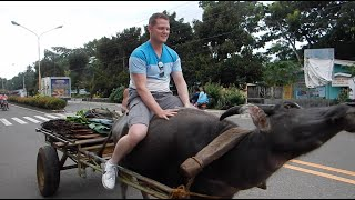 Canadian rides carabao (water buffalo) in Dapitan, Philippines