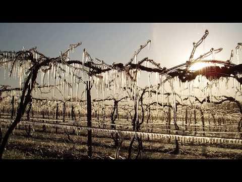 Grape Video 40   Vineyard Site Selection  Part 2