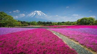 Японская музыка / Japanese music