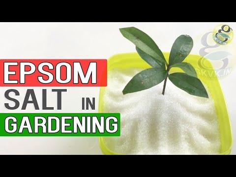 EPSOM SALT IN GARDENING | Benefits in Gardening, Plants and Soil | Garden Tips