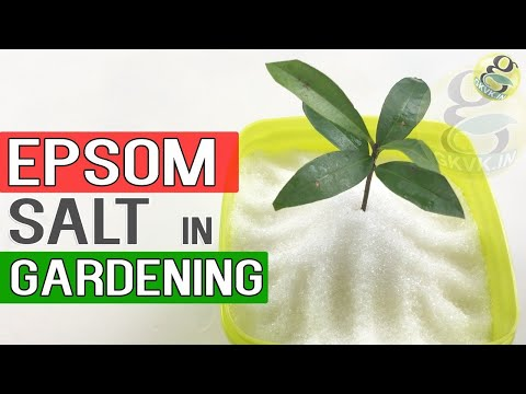 EPSOM SALT IN GARDENING | Benefits in Gardening, Plants and Soil | Garden Tips