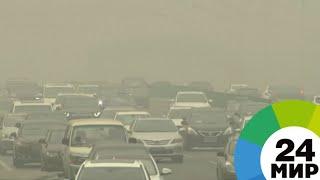 Нечем дышать: Пекин и Нью-Дели задыхаются от смога - МИР 24
