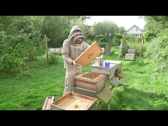 Apiguard biologische varroabestrijding