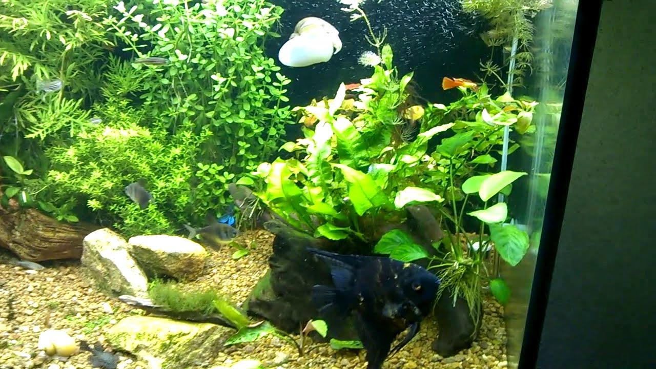 Ночное освещение для морских и пресноводных аквариумов. Глубокий синий цвет для роста кораллов и беспозвоночных в морском аквариуме.