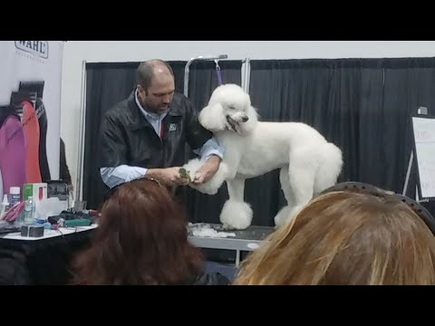 Grooming Demo: Standard Poodle w Jay Scruggs #APF2018