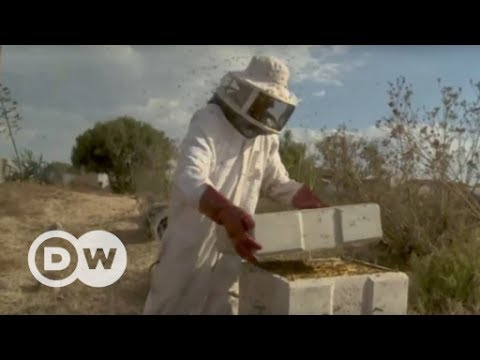 A beehive with 'air conditioning' | DW English