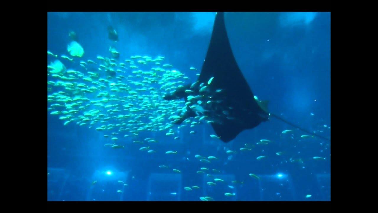 Fish aquarium in sentosa - Sea Aquarium At Sentosa Singapore