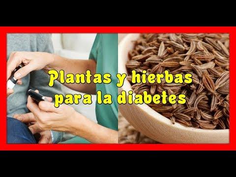 dieta para la diabetes aimil