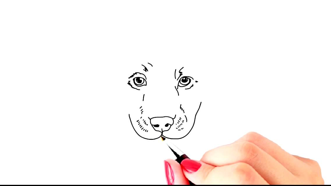 How to Draw a Labrador Puppy innocent looking cute and simple