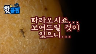 곤충을 통해 사건의 진범을 잡는다! [핫클립] / YT…