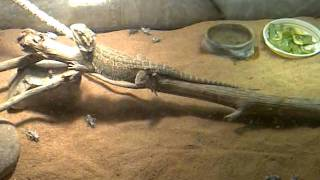 Play Reptile Room (Rhythm Mix)