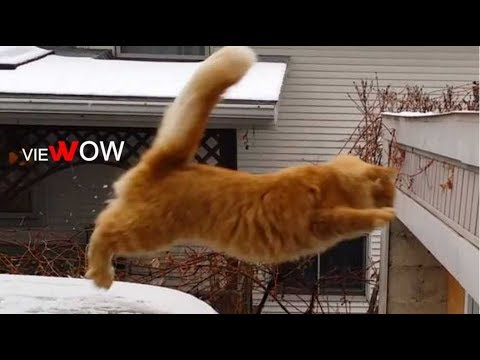 EPIC CAT FAILS ★ Try Not to Laugh!: Funny CAT Compilation - VIEWOW