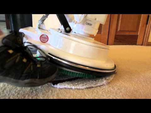 Oops Carpet Cleaning Wauchope on The Wauchope Wire