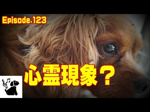 心霊現象?犬が寝れない理由123 面白可愛いペット動画 funny dog