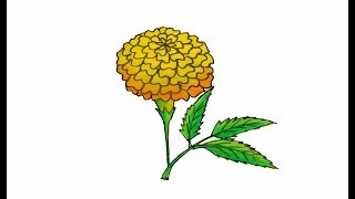 How to draw a realistic Marigold Flower easy and simple | Sayataru Creation