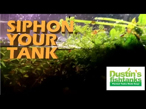 How To Siphon A Dirted Planted Aquarium. Jungle Val Tips