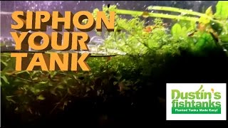 How to siphon a dirted planted aquarium. jungle val tips mel
