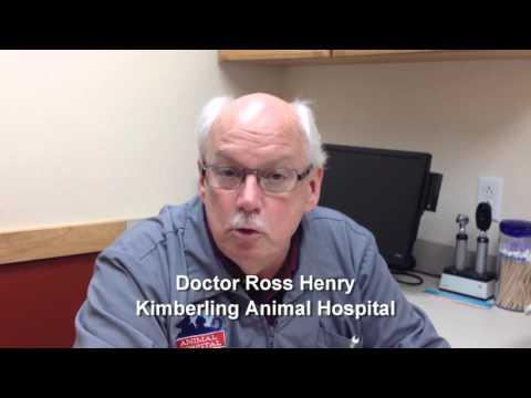 Pet Tips   Liver Disease In Cats