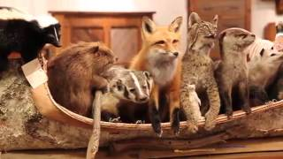 American Natural Resources Supplies Taxidermy To Rustic Furniture Market ~ Furniturehd