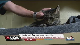 Boone County Jail pairs 'Cuffs and Collars,' using cats to help inmates