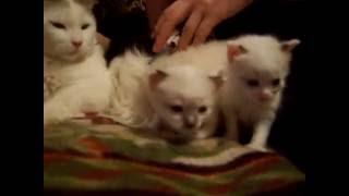 котятам 3 недели