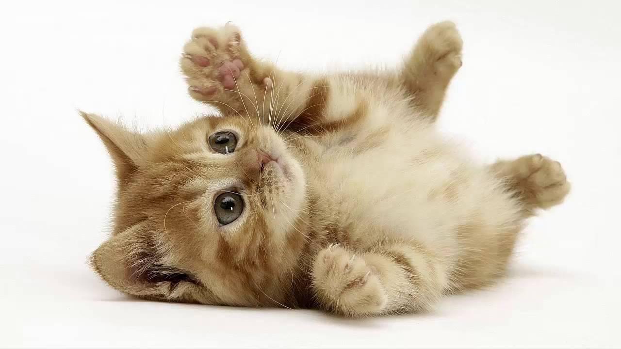 Video hình ảnh những con mèo cực kỳ đáng yêu và dễ thương