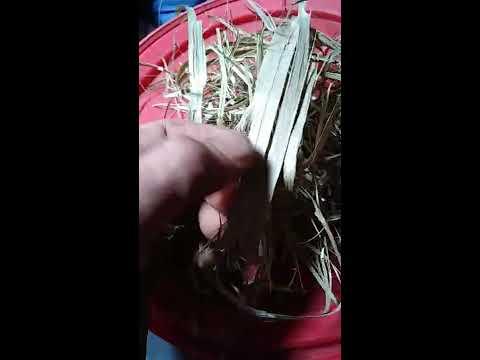 Preparing raw Hemp fiber for at Home biodegradable Bio plastic