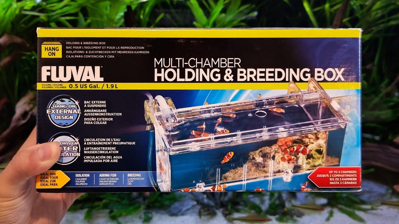 Si tienes peces este producto te puede ser MUY ÚTIL | Caja de aislamiento y crianza Fluval