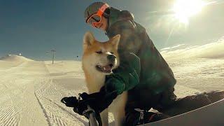 Щенок акита ину бежит по склону за хозяином в Гудаури - Puppy Akita inu runs in Gudauri