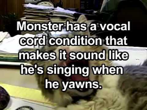 Il gatto che canta