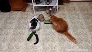 Кошки Против Огурцов #2 - Cats vs Cucumbers #2