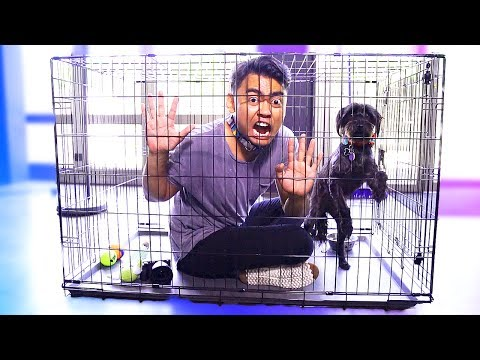 Thumbnail: Escape The Dog Cage Challenge!