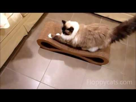 Ragdoll Cats Receive Karma Products Infinity Cat Scratcher - ねこ - ラグドール -- Floppycats