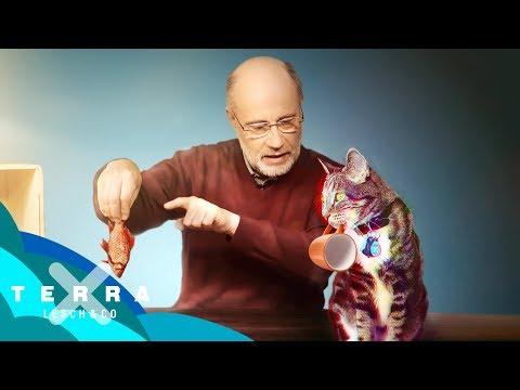 Schrödingers Katze – Tot oder lebendig? | Harald Lesch