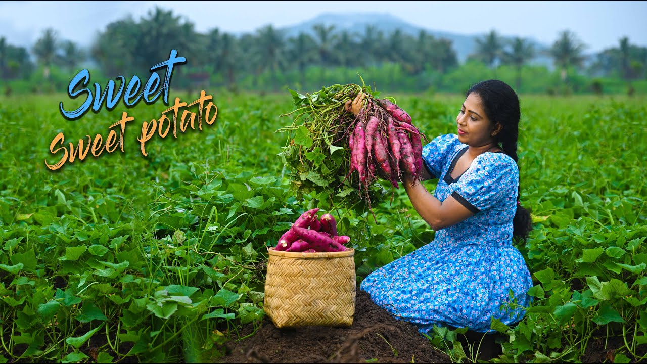 Sweet potatoes! Good with aromatic spices as a curry as well as a Sweet dessert | Traditional Me