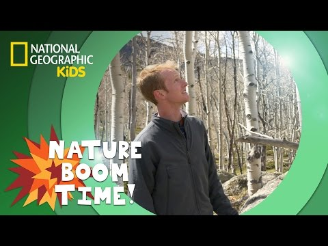 Tree Clones | NATURE BOOM TIME