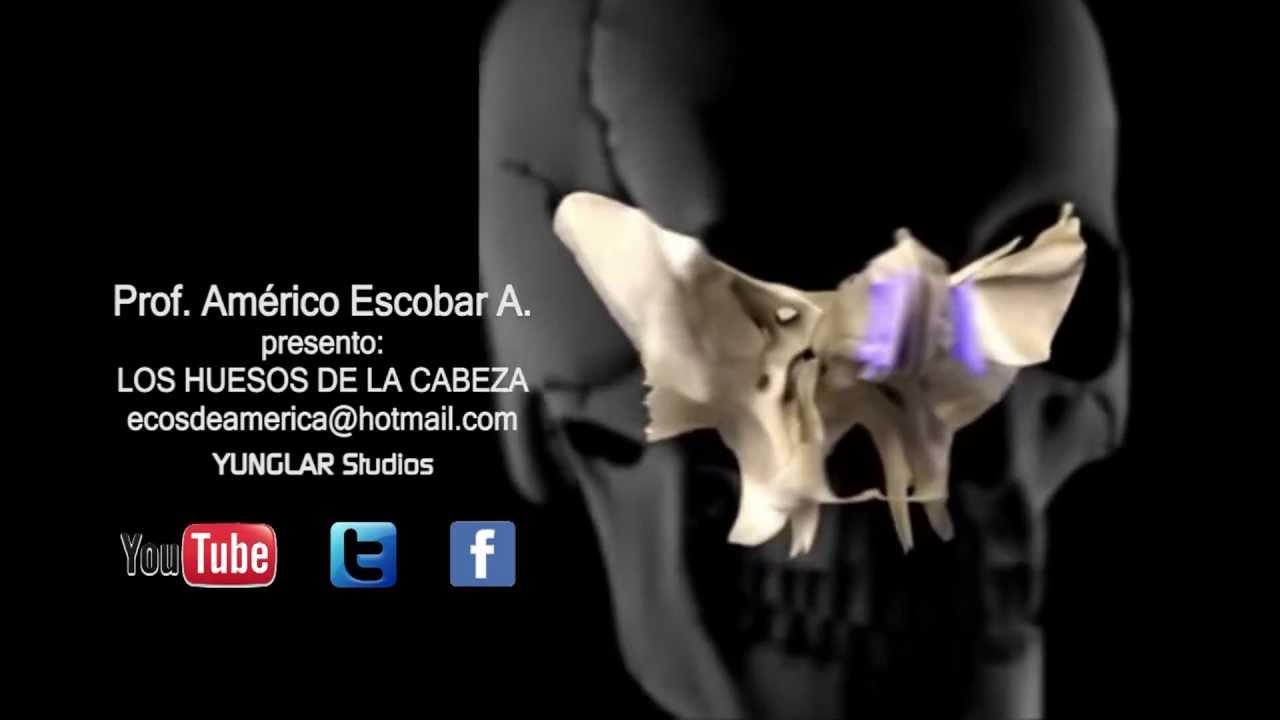 ANATOMIA - HUESOS DE LA CABEZA HD - YouTube
